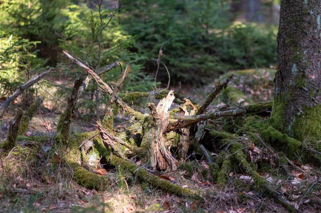 Baumwesen vertraut in natürliche Reaktion des Organismus Erde.