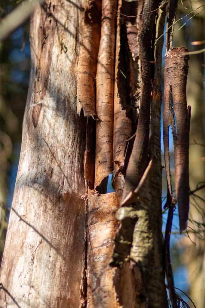 Baum im Übergang